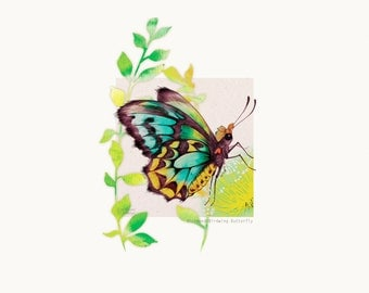 30cm x 30cm Art Print - Richmond Birdwing Butterfly