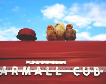 baby chick photo - tractor photo - farm house decor - living room decor - wall art - fine art photography - farm photo