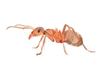 Watercolour Ant Illustration