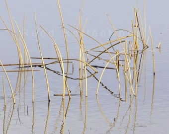 Reed Reflections #2