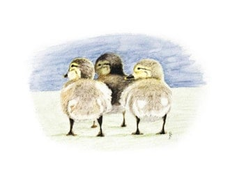 Trio of Ducklings, Limited Edition Print, 5x7