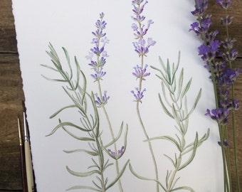ORIGINAL painting of lavanda Botanical watercolour Wall art Botanical painting Original artwork Floral illustration aquarelle