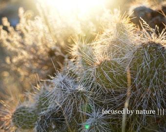 Cacti V