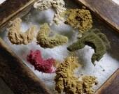 Faerie Dust Herbal Hair Conditioner Blend 7 grams
