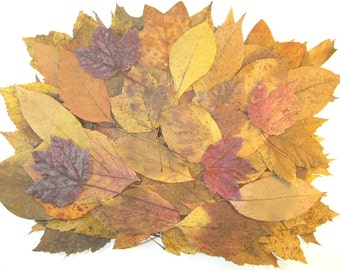 80 Fall Leaves, Real Pressed Leaves, Fall Wedding Supply, Gold Red Brown, Large Leaves, Table Decorations, Fall Craft Supply, Dried Leaves