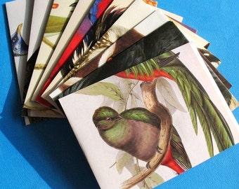 Birds - A2 Envelopes
