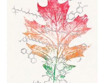Colour Chemistry Oak Leaf Print and Linocut, Leaf Print, Lino Block Print Organic Molecules and Multicoloured Oak Leaf Print