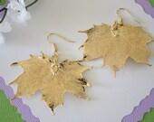 Gold Leaf Earrings, Maple  Leaf , Real Leaf Earrings, Real Gold Sugar Maple Leaf, Gold, Canadian Maple Leaf, Nature, LEP46