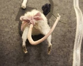 Taxidermy mouse pin rear end