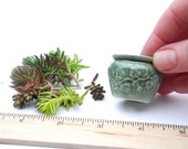 Miniature Ceramic Pot with Sedum Cuttings, Authentic Green-Glazed Porcelain Pot with Easy to Maintain Sedum Cuttings, Soil Included.