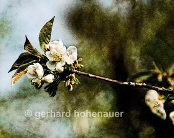 "01 ""Wonderful blossom"" -  Abstract Photography/Digital-Work-Photography"