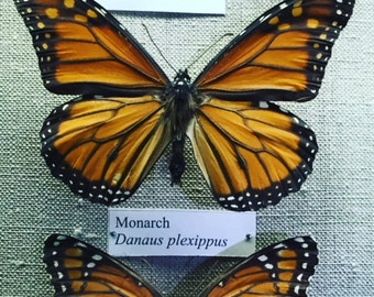 monarch photograph 5x5