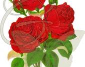 Red Rose Flower Digital Image Illustration Clip Art Download Botanical Art