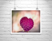 Cactus, Cacti, Heart in Nature, Romantic, Love, Valentine, Fuchsia, Pink, Purple, Violet, Prickly Pear
