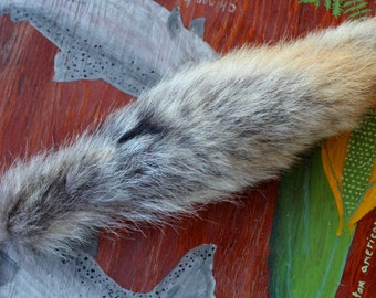 Coyote tail - real eco-friendly coyote fur tail on extra strong braided leather belt loop for totem ritual and dance CY05