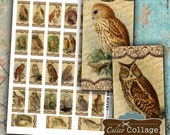 Old World Owls 1x2 Domino Images Digital Collage Sheet for Bezel Settings, Dominoes, Wood Tiles, Decoupage Paper, Craft Paper, Scrapbooking