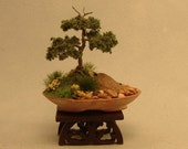 Dollhouse Miniature Bonsai - Informal style, Juniper with jin