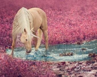 Fantasy Art Unicorn Print Photography, Nursery Decor, Girls Room Decor, Horse Photography, Wildlife Photography, Pink Unicorn