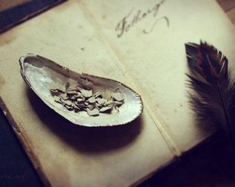 "Still Life Photography, Seashell, Sage, Smudge, Pagan, Nature, Feather, Earthy, 6x9 or 8x12. ""Shell & Sage""."