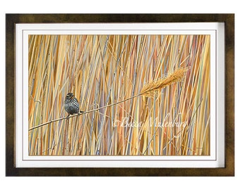 Red-winged Blackbird S/N LE PRINT wildlife nature fine art