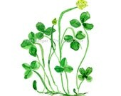Clover plant art print, St Patric's day, lucky clover art, Kelly  green, watercolor print, Botanical print, Shamrock, luck of the Irish,