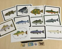 Fish Specimen Notecards - Variety Pack Set of 4