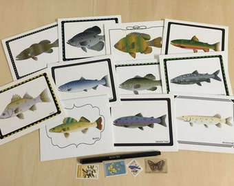 Fish Specimen Notecards - Variety Pack Set of 4