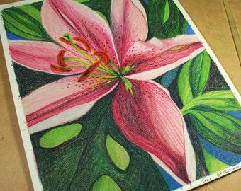 Oriental Stargazer Pink Lily Flower . Original Color Pencil Drawing . Flower Nature Art . Art Realism
