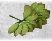 Medium Green Mulberry Leaves Set of 20 for Scrapbooking, Cardmaking, Altered Art, Wedding, Mini Album