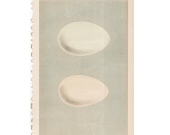 ANTIQUE EGG LITHOGRAPH from 1875 - original antique hand colored print of bird eggs