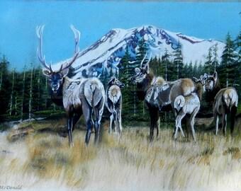 Mt. Shasta Elk original painting by Michaeline McDonald - wildlife art, elk painting, original painting,