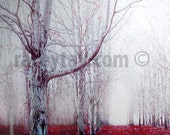Gray Red Forest Print- Surreal- Spooky Fall Nature Photography- Dark Gothic Fairy Tale Wall Art