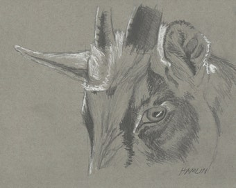 Billy Goat Study - Open edition print of an original drawing (fits 11x14 frame)
