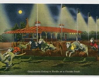Greyhounds Taking Hurdle Night Racing Florida Dog Track linen postcard