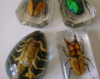 BUGS! Choice of 3 Large Beetles Pendants for Necklace or Your Creations in Resin