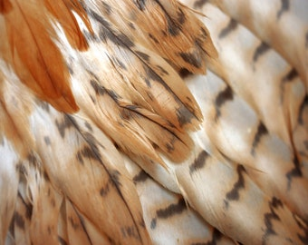 Photo download Surreal photography Digital download printable art Bird feathers wings Wild nature Brown beige rust Southwestern decor Indian