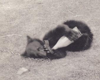 Baby BEAR Plays With MILK BOTTLE Photo 1941 La Crosse Wisconsin