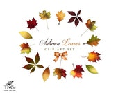 Autumn Clipart - Leaf Clip art - Nature Art - Fall Clipart - Commercial use digital clip art - Seasonal clipart - Fall Leaves clip art