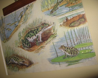 Vintage 1930s Science Print of Frogs in The Pond Old School Chart Vibe Glorious Mellow Shades More for Pair, Grouping, Vtg Hanger Option