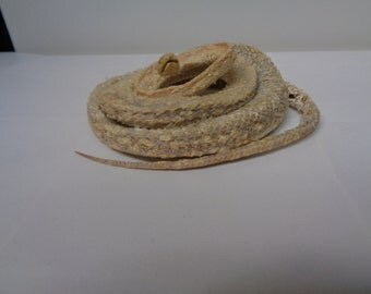 large mummified snow phase corn snake preserved specimen