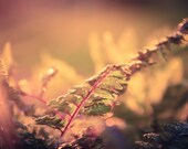 Nature Photography fern,peaceful,sunbeams,pink,baby nursery art,stunning,surreal,ferns in sunset,enchanting home decor,bokeh,abstract,mauve