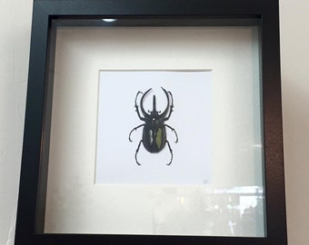 Hand Drawn Paper Vegan 'Taxidermy' Scarab Beetle