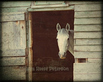 Peekaboo Gray Mare, Horse Photography, Fine Art Print, Rustic, Barns, Equine Home Decor, Farm Animals, Ranches, Horses Wall Art