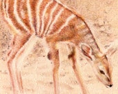 """RESERVED: Original ACEO - Baby Gazelle - 2.5"""" x 3.5"""" Unique Artwork - Free Shipping - Portion of Proceeds to Charity"""