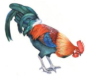 Rooster print of watercolour painting A4 size medium print R7215 - Farmyard fresh decor- country home decor- farmhouse decor - kitchen art