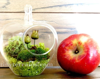 Woodland Apple Lichen and Moss Terrarium: Teacher Gift, Hanging Terrarium