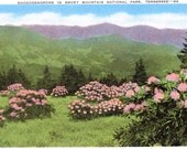 Smoky Mountains, National Park, Tennessee, Rhododendrons - Linen Postcard - Unused (X)