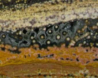 Beige Brown Green n White Ocean Jasper Slab 1RS0318