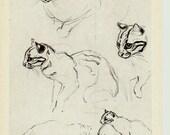 Ocelot, Drawing, Illustrations of Animals by Vatagin, Vintage Russian Postcard  unused 1978