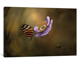 iCanvas Lightness Of Being Gallery Wrapped Canvas Art Print by Heather Bonadio